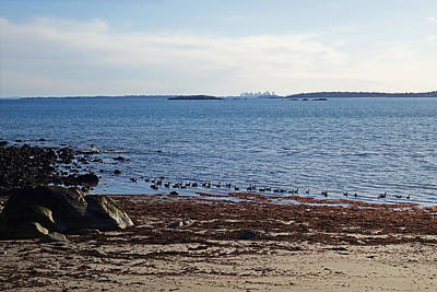 Photograph - A Long Way From Boston. Geese On Marblehead Neck Admiring The Boston Skyline, Ma by Toby McGuire