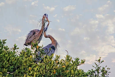 Photograph - A Love Offering by HH Photography of Florida