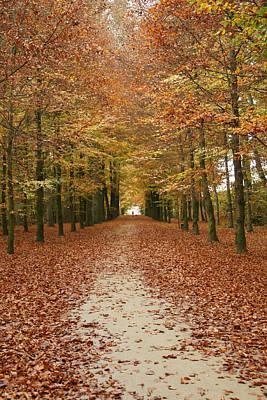 Wall Art - Photograph - A Lovely Autumn Walk by Brandy Herren