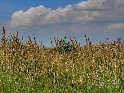 Photograph - A Low Rise View Of Birkdale Common by Joan-Violet Stretch