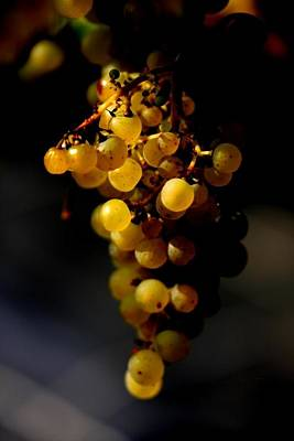Icewine Photograph - A Luscious Bunch Of Grapes by Ian Sanders