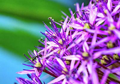 Photograph - A Macro Voyage Into Giant Allium 2   by Steve Harrington