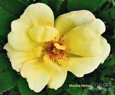 Photograph - A Macro Yellow Rose by Marsha Heiken