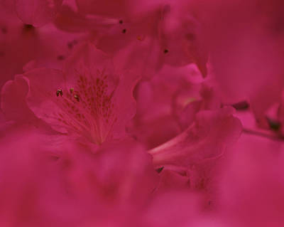 Photograph - A Magenta Moment by Jane Eleanor Nicholas