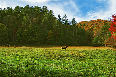 Maggie Valley Photograph - A Maggie Valley Autumn Day by Jordan Whitt