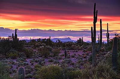 Photograph - A Magical Desert Morning  by Saija  Lehtonen