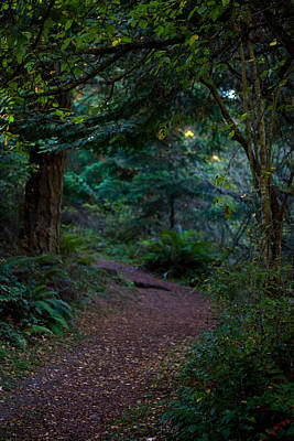 Photograph - A Magical Place - Evening Path by Marie Jamieson