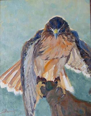 A Magnificant Hawk Original by Sandra Harris