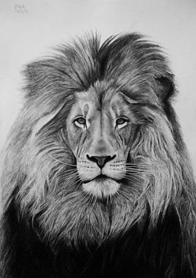 Drawing - A Majestic Stare by Vishvesh Tadsare