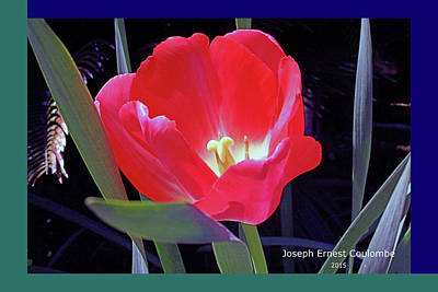 Digital Art - A  March Event - Tulips by Joseph Coulombe