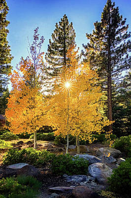 Photograph - Aspen Colors by Maria Coulson