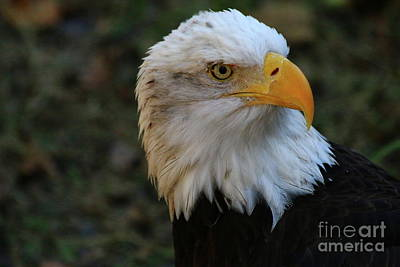 Photograph - A Marvelous Bird by Christiane Schulze Art And Photography
