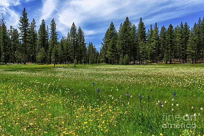 Photograph - A Meadow In Lassen County by James Eddy