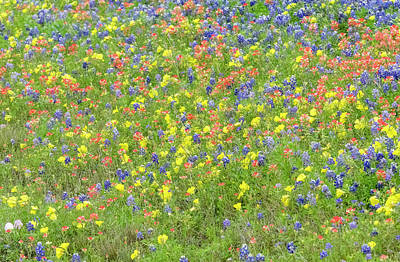 Photograph - A Meadow Of Mixed Blooms. by Usha Peddamatham
