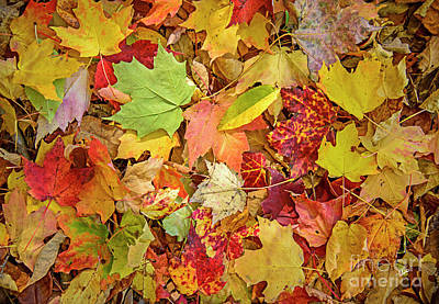 Photograph - A Medley Of Leaves by Alana Ranney