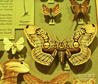 Photograph - A Mighty Fine Specimen by Elizabeth Hoskinson