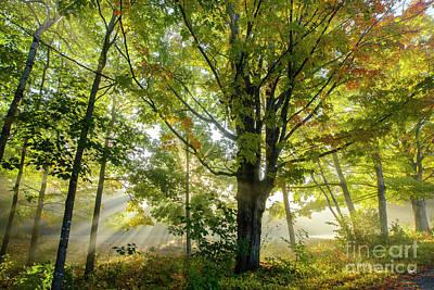 Photograph - A Misty Fall Morning by Alana Ranney