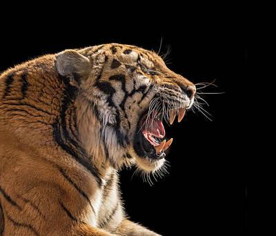 A Model Tiger Art Print by Pat Eisenberger
