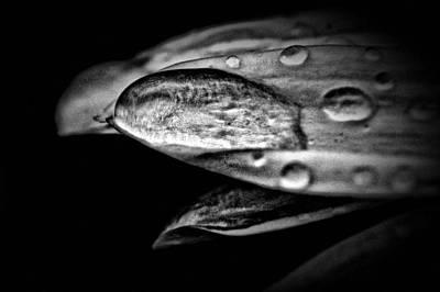 Photograph - A Moment - B And W by Rhonda Barrett