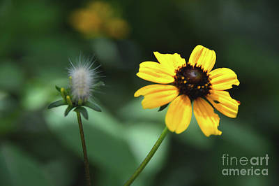 Photograph - A Moment In The Sun-butterfly Garden Series by Robyn King