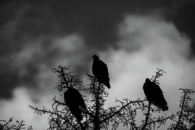 Photograph - A Moment In Time For A Dead Pine by Rae Ann  M Garrett