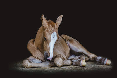 Photograph - A Moment Of Rest by Fast Horse Photography