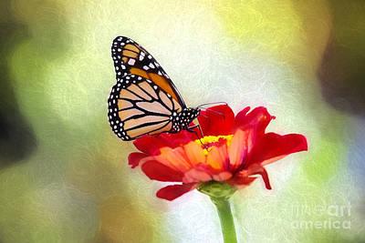 A Monarch Moment Art Print