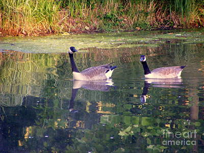 Photograph - A Morning Swim 2 by Nancy Kane Chapman