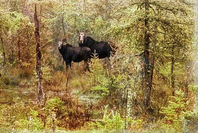 Digital Art - A Mother And Calf Moose. by Rusty R Smith