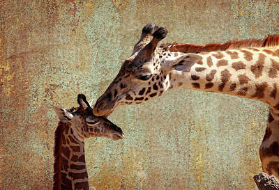 Photograph - A Mother's Kiss by Judy Vincent