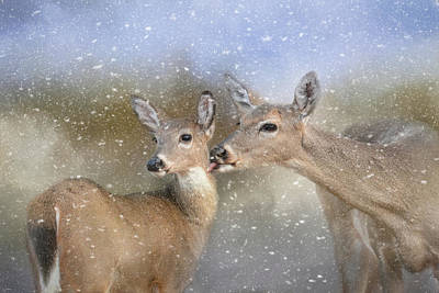 Photograph - A Mother's Love Deer Art by Jai Johnson