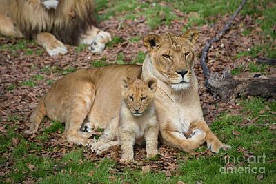 Photograph - A Mother's Love by Karen Jorstad