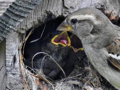 Bird Photograph - A Mother's Work Is Never Done by Deborah Weinhart