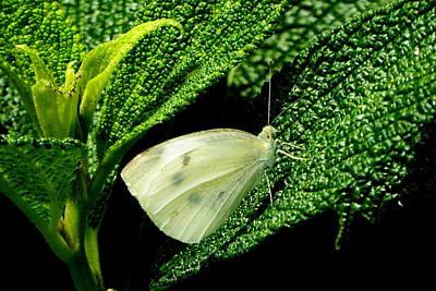 Photograph - A Moth's Green Meadow by Lori Seaman