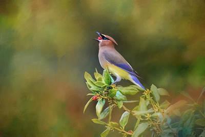 Photograph - A Mouth Full Of Berry Bird Art by Jai Johnson