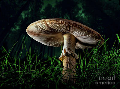 Photograph - A Mushroom In The Woods by Mark Miller