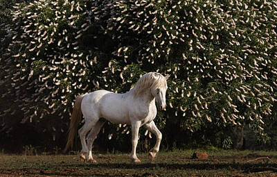 A Mustang Stallion In The Wild Horse Print by Melissa Farlow