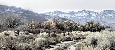 Photograph - A Muted Sierra by Marilyn Diaz