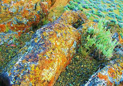 Photograph - A Myriad Of Lichens by Michele Penner