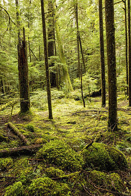 Bringing The Outdoors In - A Mystery in Green by Belinda Greb