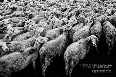 A Nation Of Sheep Art Print