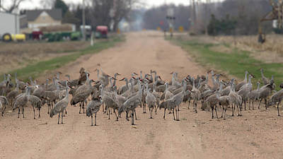 Photograph - A Nebraska Roadblock by Susan Rissi Tregoning