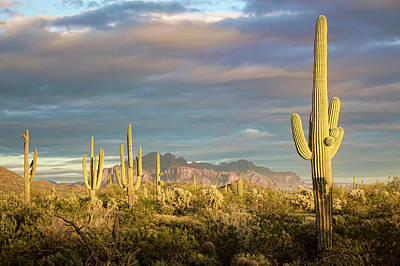 Photograph - A New Desert View by Ryan Seek