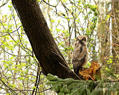 Photograph - A New Friend Of The Forest by Heather King