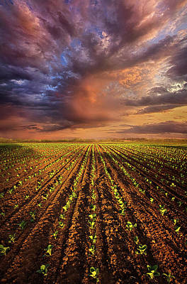Photograph - A New Season by Phil Koch