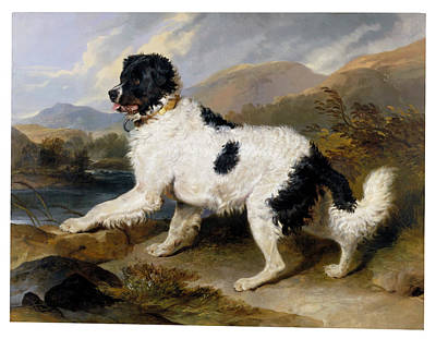 Landseer Painting - A Newfoundland Dog by MotionAge Designs