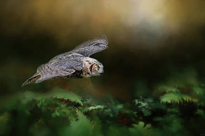 Photograph - A Night With The Great Horned Owl 1 By Jai Johnson by Jai Johnson