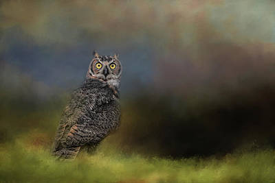 Photograph - A Night With The Great Horned Owl 4 By Jai Johnson by Jai Johnson