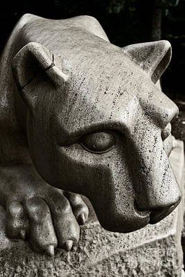 Penn State University Wall Art - Photograph - A Nittany Lion by Tom Gari Gallery-Three-Photography