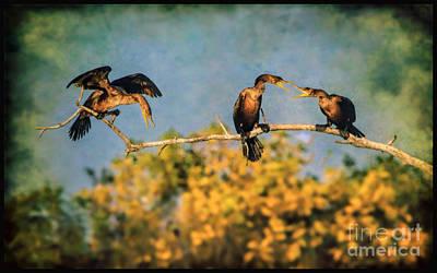 Photograph - A Noisy Quarrel by Elizabeth Winter